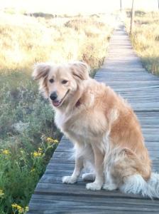 Emmy on the boardwalk