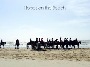 horse group on beach with heading