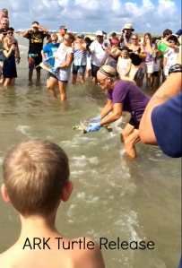 Checking out a turtle release is a fun family event to share while at the Blue Roost beach house in Port Aransas.